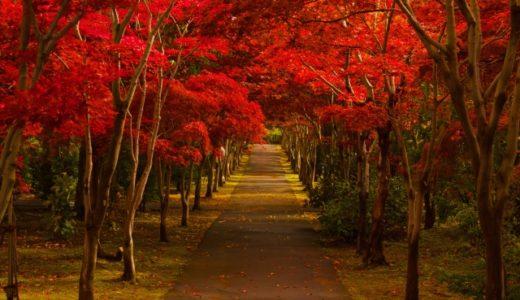 秋の季語はどんな物がある? 小学低学年向けの季語